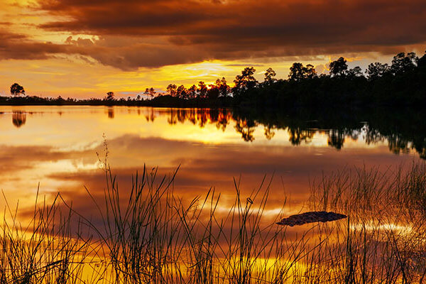 best airboat ride Archives - Florida Everglades Private